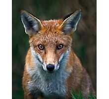 Red Fox Portrait Photographic Print