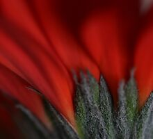 Red Imagination by RosaMarieAshby