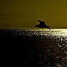 Evening Patrol by Richard Hamilton-Veal