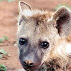 JUST STARING, THE BABY  Spotted Hyaena - Crocuta crocuta by Magaret Meintjes