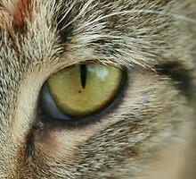 Cat's eye by Alex Meyer