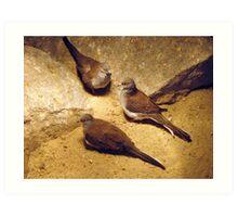 Doves... Art Print