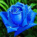 Blue Rose by Xandru