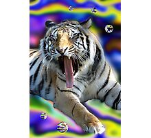 Tiger Two Photographic Print