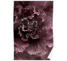 Ornamental Cabbage #2 Poster