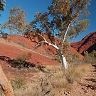Ghost Gums, Kata Tjuta National Park, Northern Territory, Australia by Adrian Paul