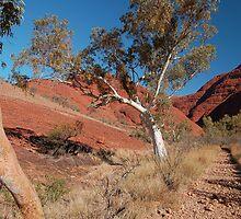 Ghost Gums, Kata Tjuta National Park, Northern Territory, Australia by Adrian Paul