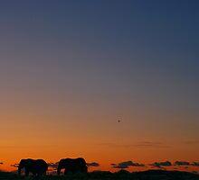 Safari Sunset by Paul Gibbons