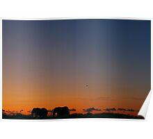 Safari Sunset Poster