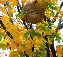 Beehive in Fall by girljo818