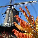 Holland's windmills: 1 of 5 by MooseMan