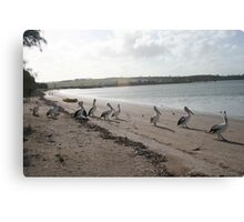 Time for a stroll. Canvas Print