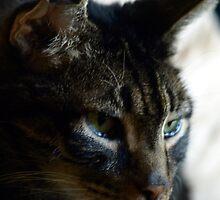 Kitty Tears by kimbarose
