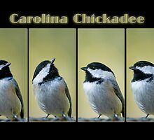 Carolina Chickadee Collage by Bonnie T.  Barry