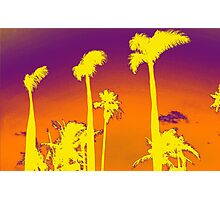 Purple Palm trees Photographic Print