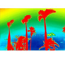 Rainbow Palm Trees Photographic Print