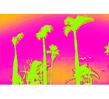 Pink Palm Trees Photographic Print