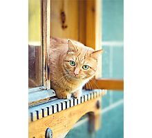 Rustic cat sitting behind a wooden house  Photographic Print