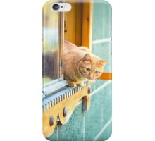orange cat in the window iPhone Case/Skin