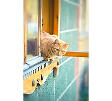 orange cat in the window Photographic Print