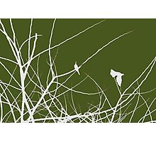 White and Green birds in trees Photographic Print