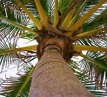 Palm Tree by Lisa DeLong