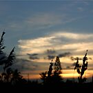 Sunset and sea oats by Lisa DeLong