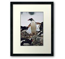 """Gentoo penguin """"Pygoscelis papua"""" #2 Framed Print"""