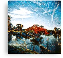 The old Devils Claws Canvas Print