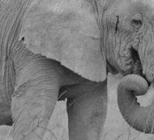 Elephant Bull - Wildlife Peace and Harmony Sticker