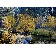 Spring Creek at the Source Photographic Print