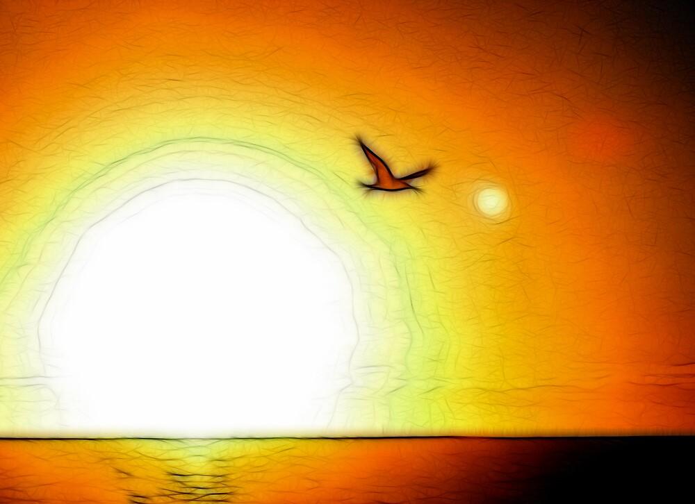 Sunset gull by SarahTrangmar