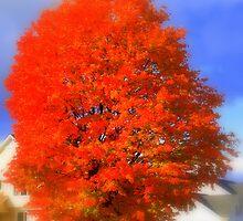 Burst of Autumn by Saphira01