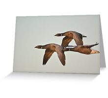 Brent trio Greeting Card