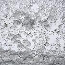Ice and snow on a window by Arie Koene
