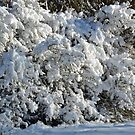 Sun and snow by Arie Koene