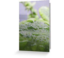 Natural water droplet Greeting Card