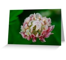 Pink Clover Delight Greeting Card