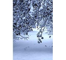 Snow-laden Photographic Print