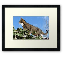 Mishu Checking Out the Bird Feeder Framed Print