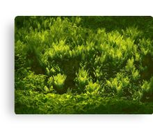 Ferns on the March bank Canvas Print