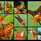 Butterfly Collage II  by Donna Adamski