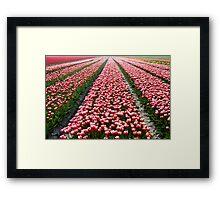 Tulip Field In Spring Framed Print