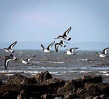 Oyster Catchers by WillBov