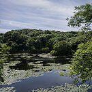 Bosherston Lilly Pond by Ben Rees