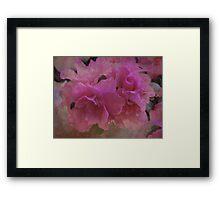 Double Azaleas Framed Print