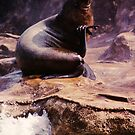 California Sea Lion on Rock by Anna Lisa Yoder
