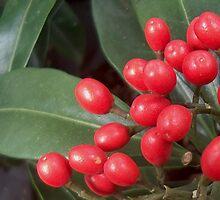 Berries by shortarcasart