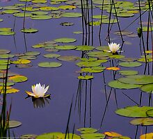 Zen-inspired Water Lily Meditations by Richard VanWart