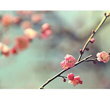 Pink Ume Photographic Print